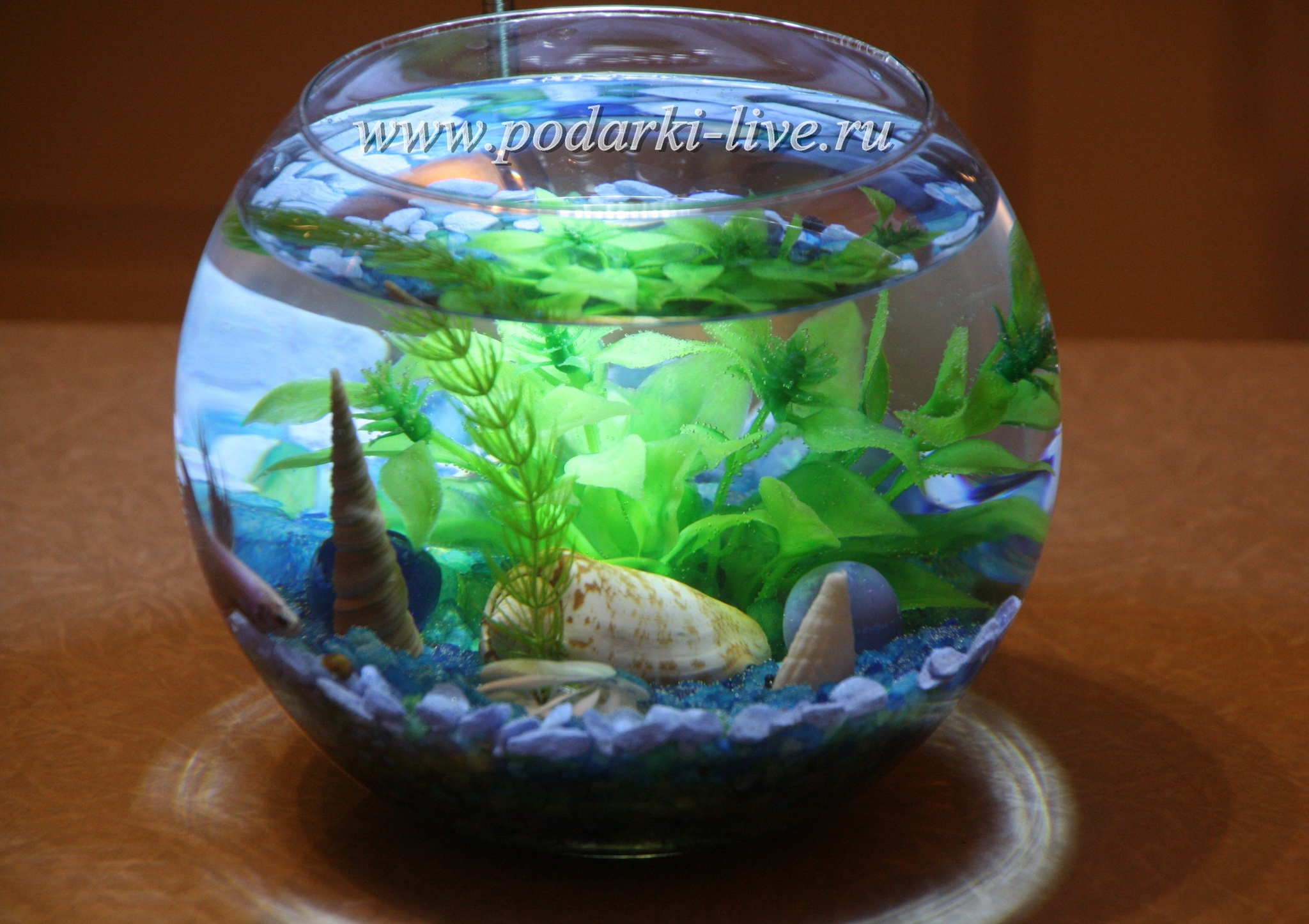 Маленький аквариум фото 7